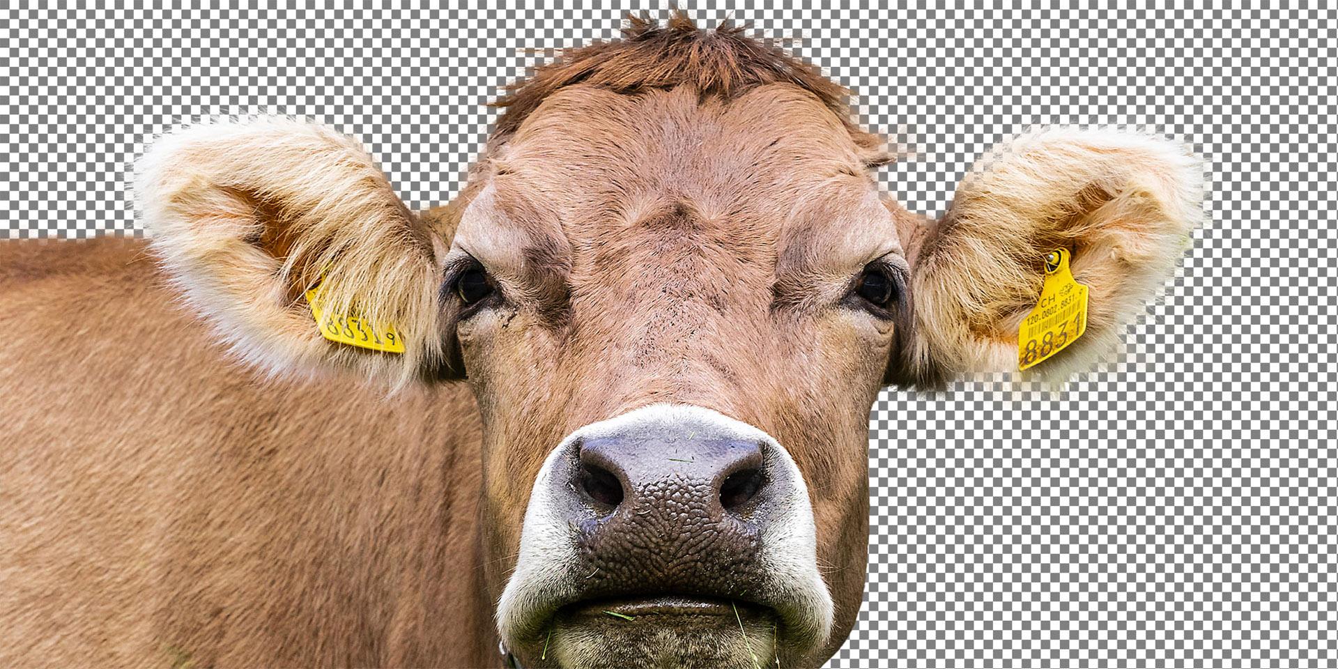 Maike Jarsetz' »Photoshop-Schlüsseltechniken«