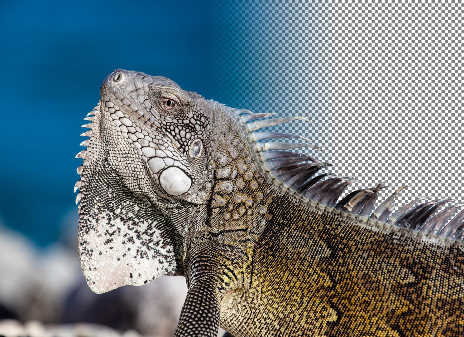 Maike Jarsetz' »Von Lightroom zu Photoshop«